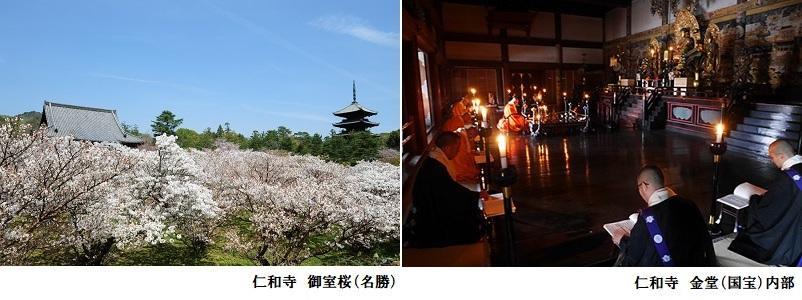 仁和寺_御室桜と金堂_802-300.jpg