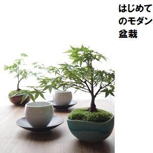 はじめてのモダン盆栽.jpg