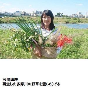 自由が丘04_多摩川の野草.jpg