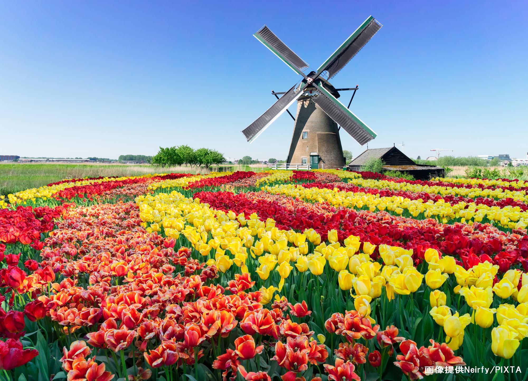 オランダ画像PIXTA名前入り.jpg