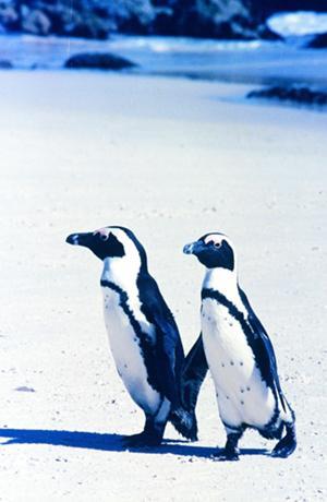 ペンギン2-3.jpg