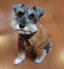 公園再スタート 愛犬の洋服を作ろう.JPG