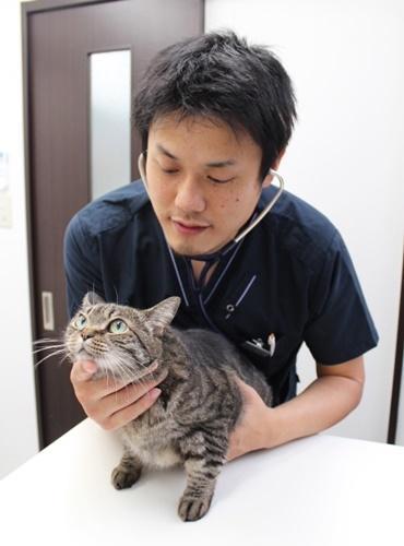 ねこ。ネコ。猫.jpg