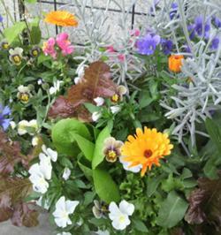 花と野菜のコンテナガーデン2.jpg
