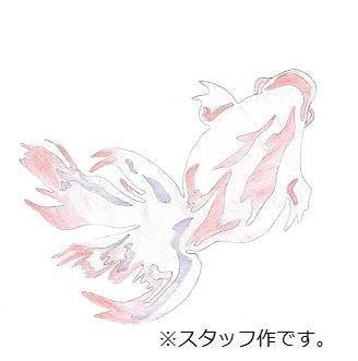 金魚20200507114057-0001.jpg