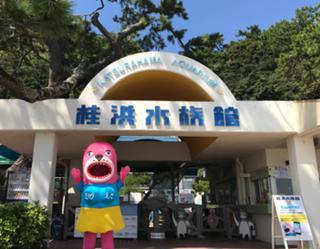オンライン 夏休みジュニア 1day 桂浜水族館生き物教.jpg