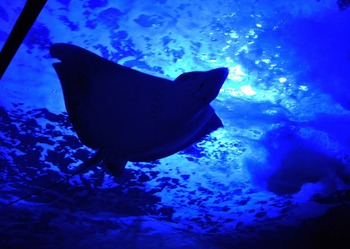 水族館で、心に残る写真の撮り方
